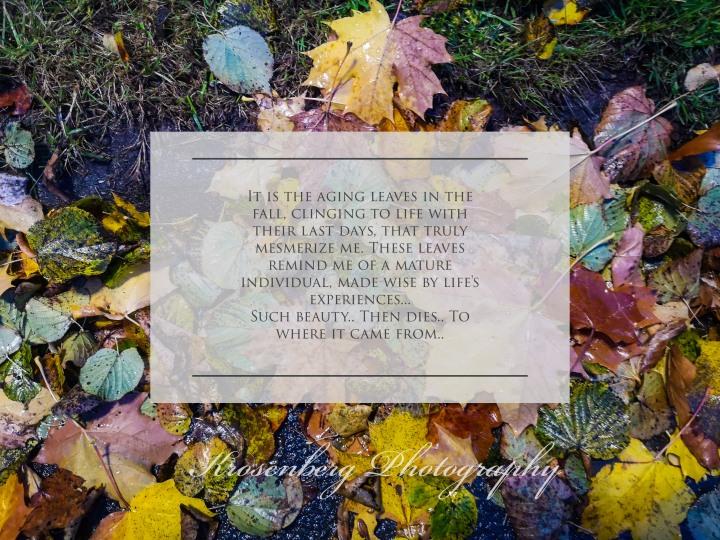 Autumn Leaves Like WomensBeauty